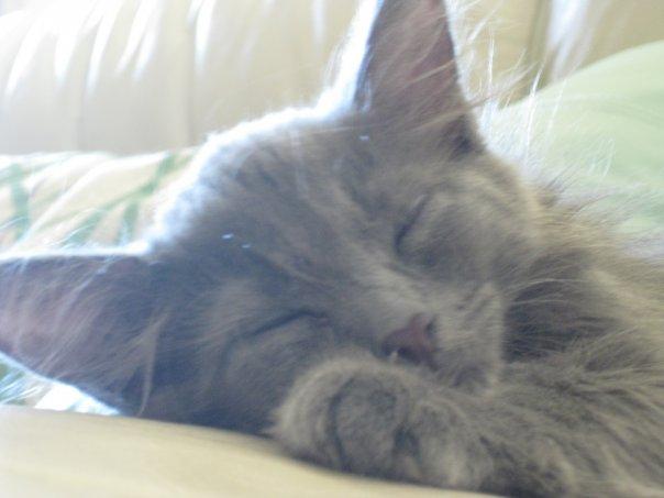 Sleepy Kitty by Jesseka-maree