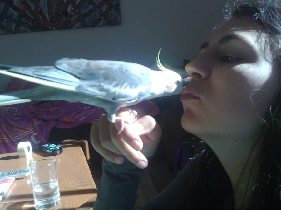 Cockatiel kisses by Jesseka-maree