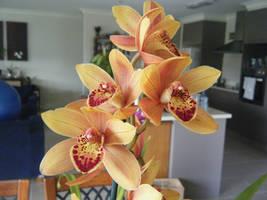Cymbidium Orchid by Jesseka-maree