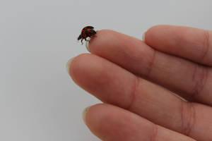 Fly little ladybug by Jesseka-maree