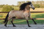 HORSE STOCK