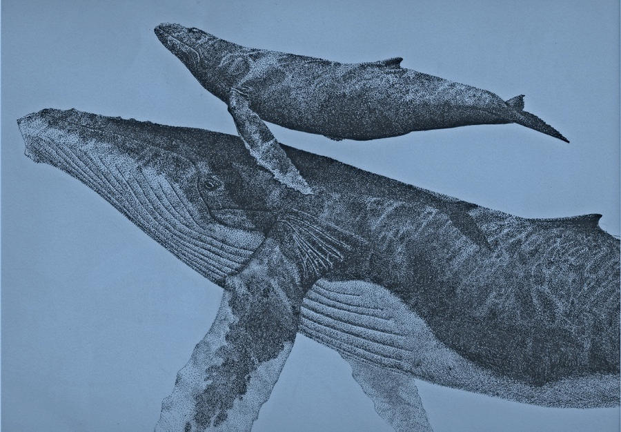Humpback and calf by Hareguizer