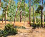 Point Pinole Eucalyptus Glade