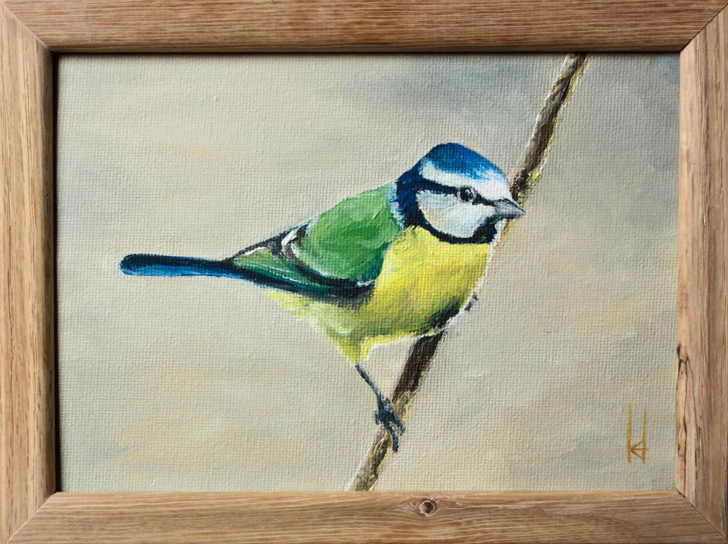 Blue Tit #1 by Hareguizer