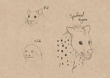 Sketch Studies