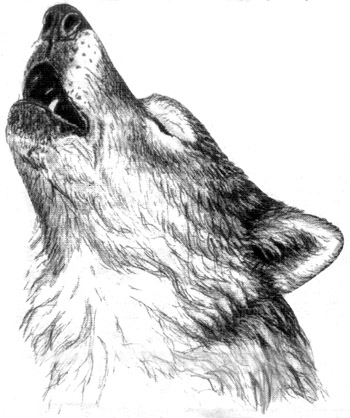 Howling Wolf head by The-Restless-Dead on DeviantArt