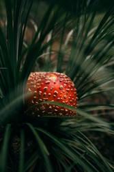 Shy Mushroom