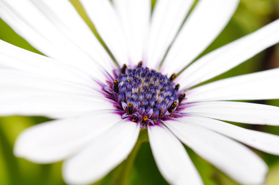 Flower by Andrex91