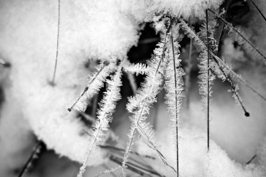 Cold Flakes by brentonbiggs