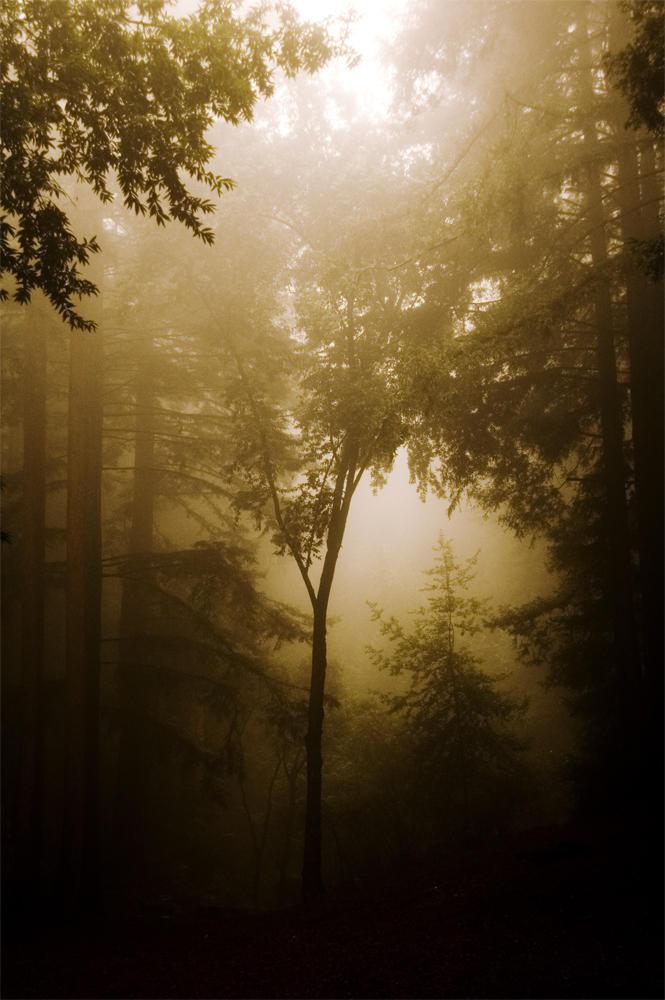 warm dark day by doultonro