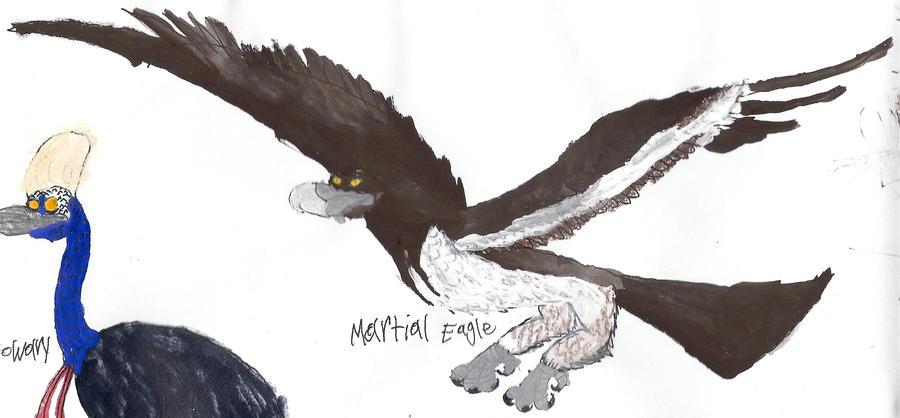 Martial eagle by masonday on DeviantArt