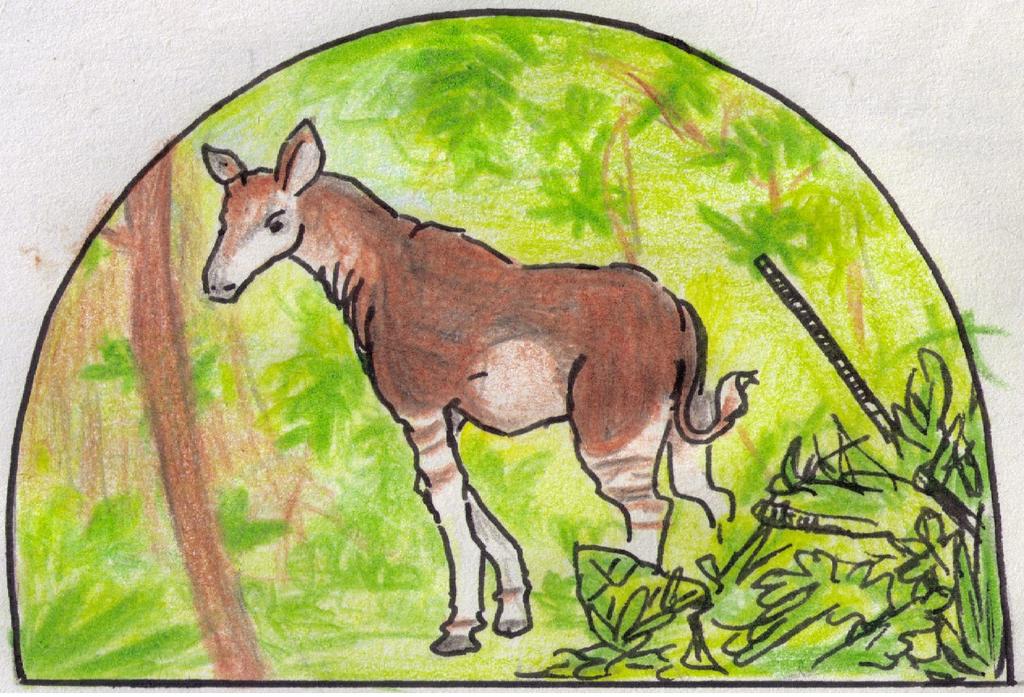 Okapi by Antaie