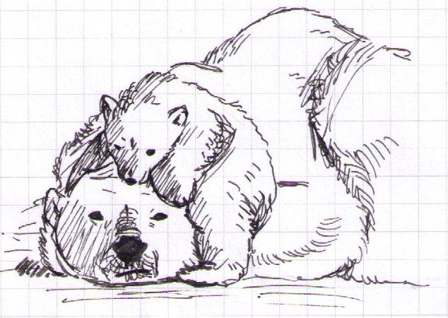 Polar bear by Antaie