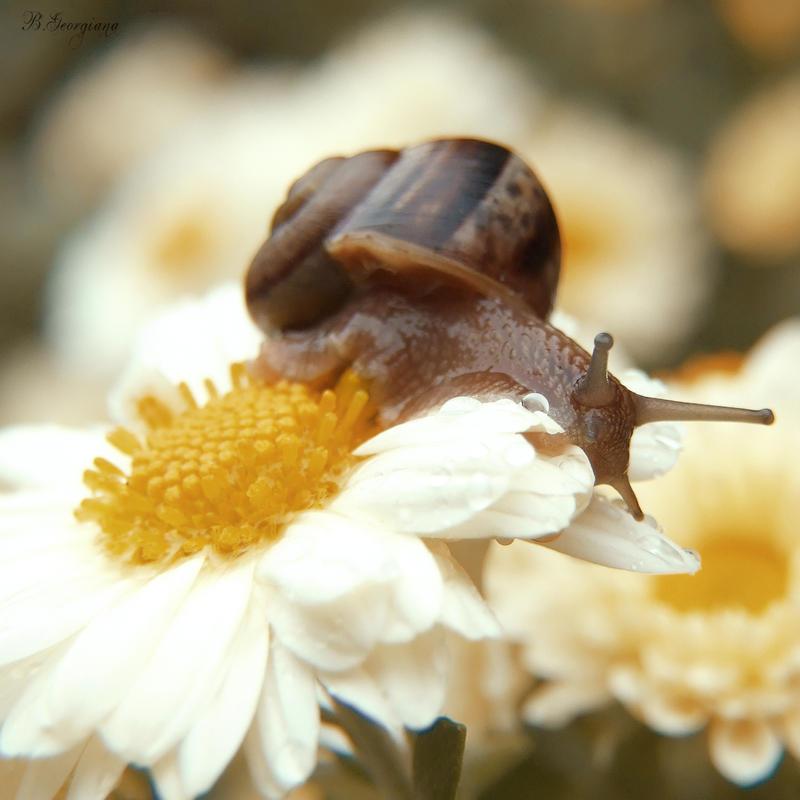 Snail by blameMYGreenSoul