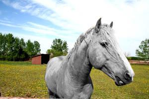 horse by InvigoratingSilence
