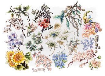 Flower Summary by Zoltruke