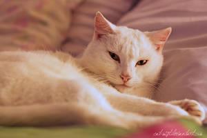 Her Meowjesty by Catlaxy