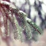 Frozen Tears by Catlaxy