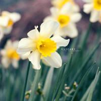 Spirit Of Spring by Catlaxy