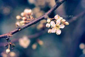 In Bloom by Catlaxy
