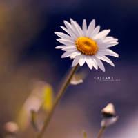 Un peu, beaucoup... by Catlaxy