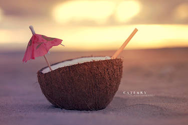 Coconut On The Beach by Catlaxy