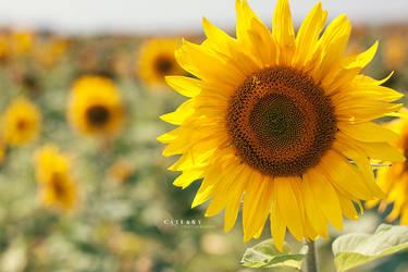 Sunwatcher