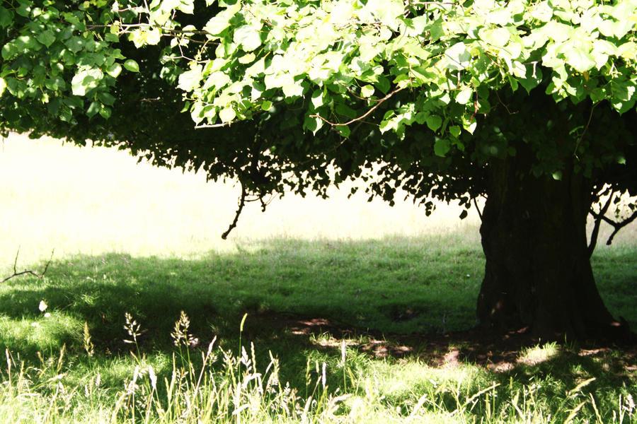Summer Days by ALittleWriter