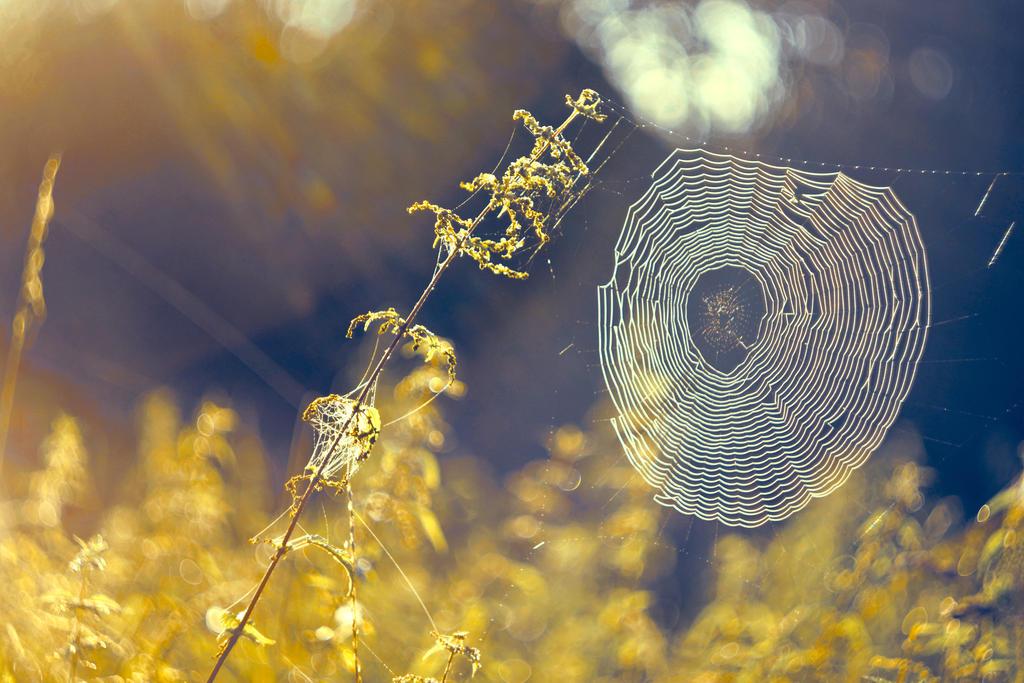 Spiderweb by ZoomedZoom