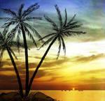 Coconut Tree Madness 2 by Memento-Mori-San