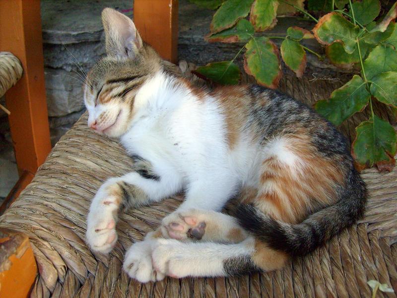 Sleepy Kitten by Spleenog