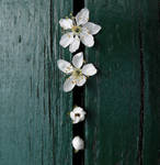Green'n'white. by mrsUrie21