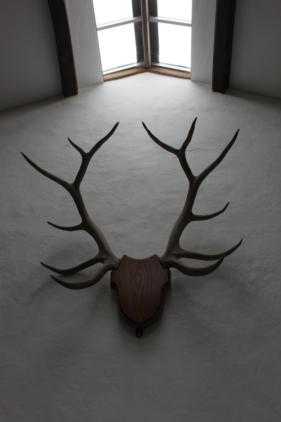 Antlers 2 by Tasastock