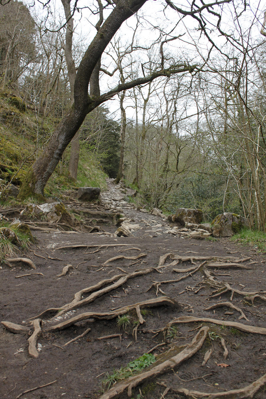 Ingleton Falls 50 by Tasastock