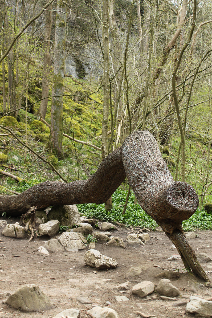 Ingleton Falls Coin Tree 1 by Tasastock