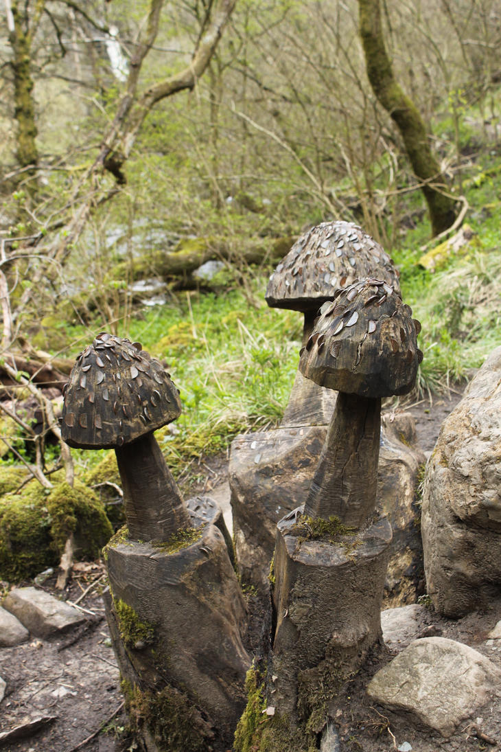 Ingleton Falls Coin Mushrooms by Tasastock