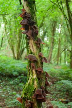Mushrooms on a Tree 3