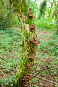 Mushrooms on a Tree 1