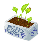 Money plant by LillieRae