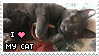 Love My Cat by Batnamz
