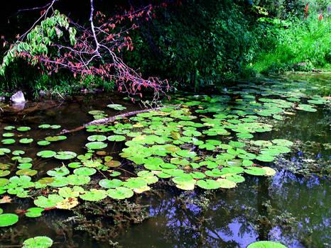Waterlily Pond 2