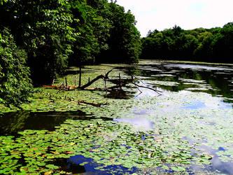 Waterlily Pond 3