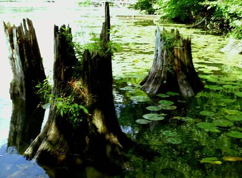 Waterlily Pond 4
