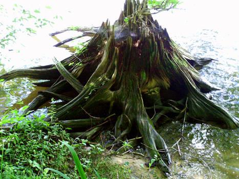 Stump 1