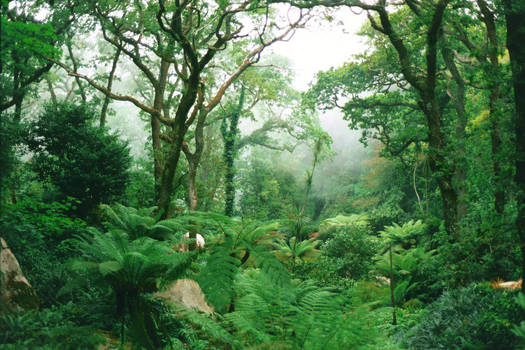 Queen's Fern Garden