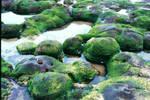 Praia Areia Branca - Low Tide1