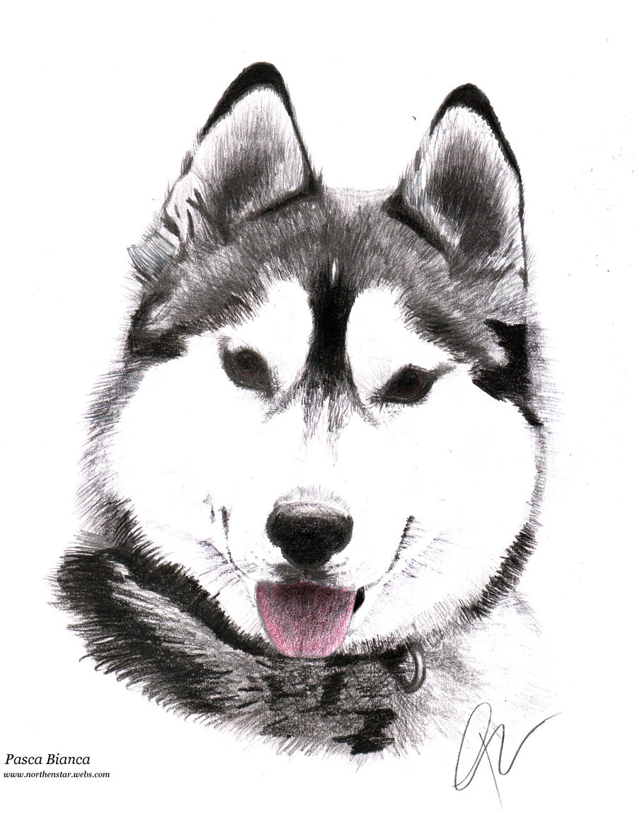 how to draw a husky easy