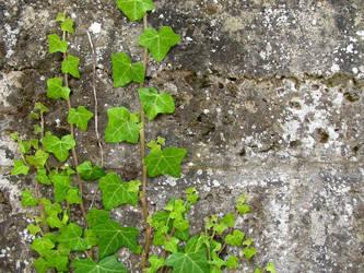 Ivy by kirys79