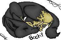 bochi image by nikoo