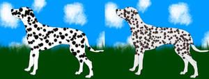 Dalmatian Imports